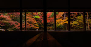 和室の奥に広がる紅葉